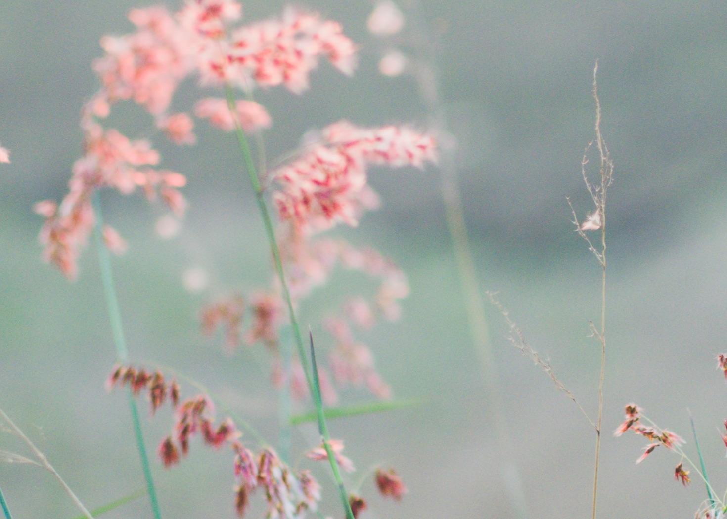 vaaleanunaiset kukat