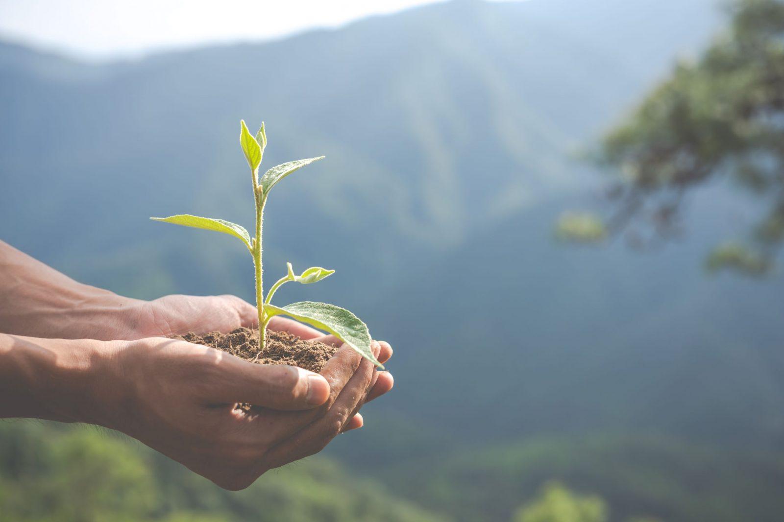 händer som håller växt i jord